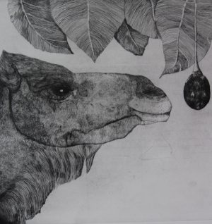 12. Camel and Tamarillo - hard ground etching - edition 25. Plate Size 40x40cm. Frame Size 67 x 65cm. Unframed $330. Framed $580