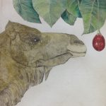 Camel and Tamarillo - etching with hand colouring - Karen Barnes