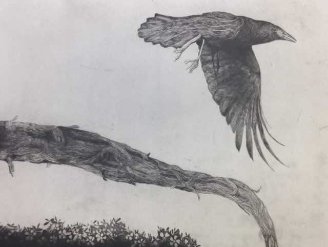 16. Crow - hard ground etching - edition 5. Plate Size 45x65cm. Frame Size 71 x 84cm. Unframed $460. Framed $760