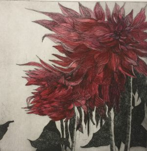 Easter Dahlia- etching with hand colouring- Karen Barnes