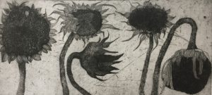 Kusama Sunflowers - etching - Karen Barnes